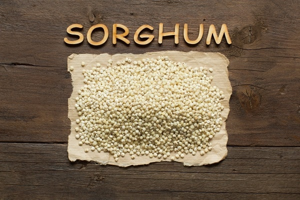 White Sorghum grain
